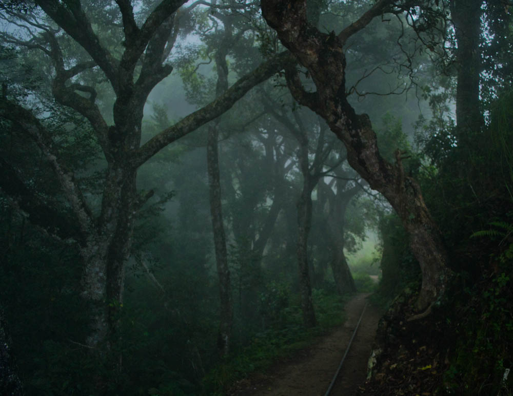Misty forests near Dolphin's Nose