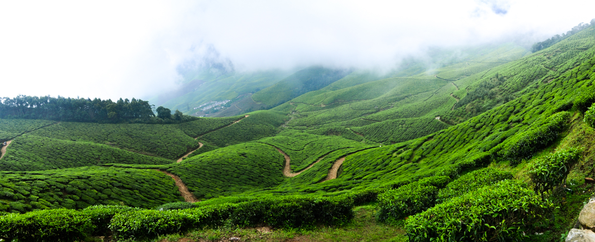 Misty Kolukkumalai near beautiful Munnar